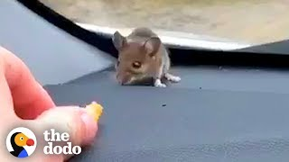Download Guy Finds Mouse on His Car Dashboard | The Dodo Video