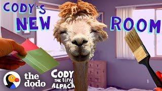 Download Tiny Alpaca Gets Her Own Bedroom | Cody The Tiny Alpaca (Episode 5) Video