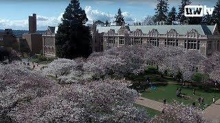 Download UW Cherry Blossom Cam Video