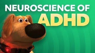Download Neuroscience of ADHD Video