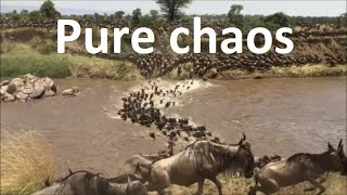 Download Great wildebeest migration between Masai Mara and the Serengeti Video