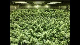 Download Large Scale Marijuana Grow Op Demolition Video