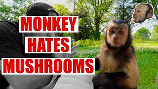 Download Monkey HATES Mushrooms! Funny Video