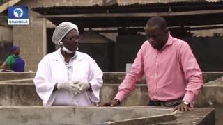 Download BOI Weekly: Spotlight On Fish Farming Pt 1 Video