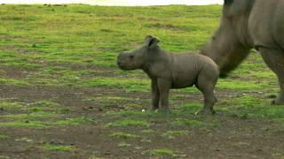 Download New Rhino Baby Video