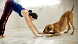 Download Funny Cats And Dogs Helping Their Owners Exercise [BEST OF] Video