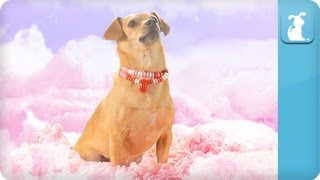 Download Katy Perry - California Gurls (ft Snoop Dog) - Katy Puppy - California Grrrs / Wide Awoof - Petody Video