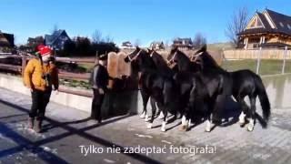 Download Konie pozują do zdjęcia bawiąc się czapką właściciela Video