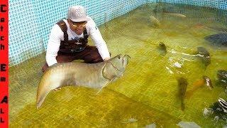 Download RARE AROWANA FISH is BACK in POOL! Video