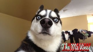 Download Best Funny Dog Vines 2015 | PART 2 Video