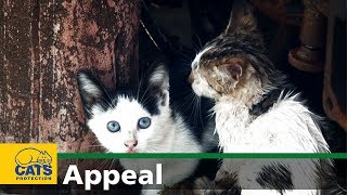 Download An urgent appeal on behalf of Cats Protection Video