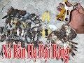 Download Trúng Mánh Ná Cao Su Bắn Hạ Đại Bàng Săn và Cu Cườm / Giống Chim Săn Yêu Quí Hậu Cáo Video