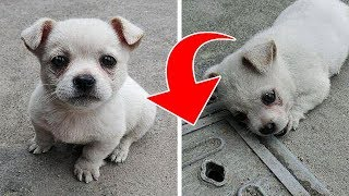 Download A Puppy Didn't Want to Move Away From This Manhole. Then Its Owner Found Out Something Heartbreaking Video