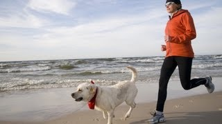 Download How to Run with a Dog Video