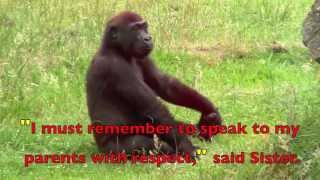 Download A (real) Gorilla Family - Children's Story - QUOTATION MARKS Video