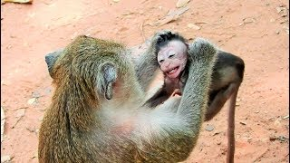 Download Poor Baby Monkey Very Small Mom Weaning Video
