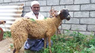 Download RAMZAN SPECIAL / Full Goat Biryani by My Muslim Friend in My Village Video