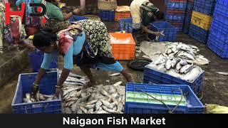 Download Naigaon Fish Market Video