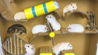 Download Hamsters Escape From Pool Cardboard - Three Hamsters Running In Pool Maze Making From Cardboard Video