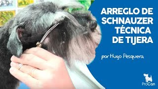 Download Tecnica Tijera Schnauzer Miniatura | Peluqueria Canina | Dog pet grooming Video