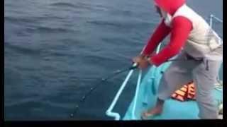 Download Black Hole Cape Cod 250gr Video