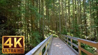 Download 4K UHD Virtual Hike in the Forest - Middle Fork Trail, Snoqualmie   Part 2 - 3.5 HRS Piano Music Video