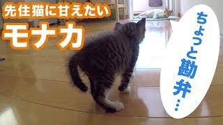 Download 子猫のモナカ、徐々に本性を現す Video