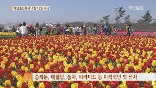 Download 태안TV - `태안튤립축제' 4월 13일 개최 Video