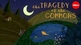 Download What is the tragedy of the commons? - Nicholas Amendolare Video