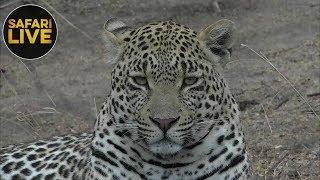 Download safariLIVE- Sunrise Safari - October 14, 2018 Video