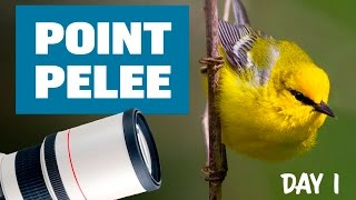 Download Bird Photography at Point Pelee 2017 - DAY 1 [BEST DAY EVER] Video