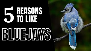 Download 5 Good Reasons To Like Blue Jays Video