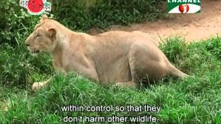 Download Nature and Life Episode 141 (Safari Park of Bangladesh) Video