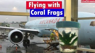 Download Flying with Live Coral - transporting live coral on an airplane in your carry on Video