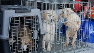 Download Tierheim Dortmund nimmt 15 Hunde aus Zuchthölle auf Video