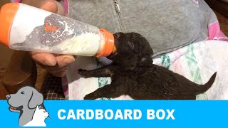 Download Rescued 7 Puppies Abandoned in Cardboard box. Video