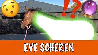 Download WELKE KLEUR WORDT EVE? | PaardenpraatTV Video