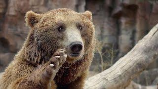 Download Darıca Hayvanat Bahçesi / Faruk Yalçın Zoo ( Darıca / Kocaeli ) Video