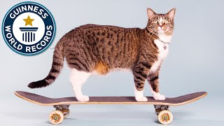Download Most tricks by a cat in one minute - Meet the Record Breakers Video