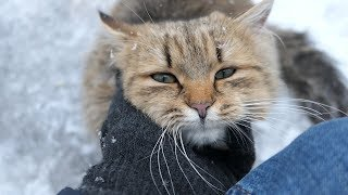Download Fluffy cat again wants not only food Video