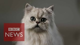 Download What's it like being a cat? BBC News Video