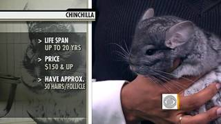Download Exotic Animals as Pets Video