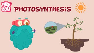 Download Photosynthesis | The Dr. Binocs Show | Learn Videos For Kids Video