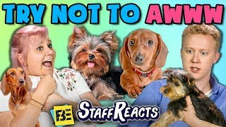 Download TRY NOT TO AWWW CHALLENGE w/ REAL PUPPIES!! (ft. FBE Staff) Video