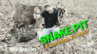 Download Snake hibernaculum (Filled with snakes) Video