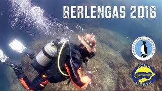 Download Mergulho nas Berlengas, 2016 Video