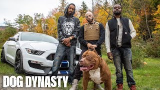Download World's Biggest Pitbull Hulk Stars In Rap Video | DOG DYNASTY Video