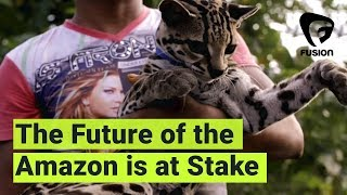 Download How Tourism and Illegal Wildlife Trade Are Threatening the Amazon Rainforest Video