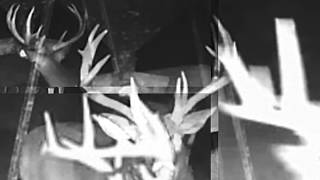 Download The Bucks of The Crush Deer Cam LIVE! v.2015.9.19 Video