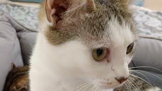 Download Kitten Close Up 2017-07-29 Video